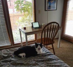 cat and desk